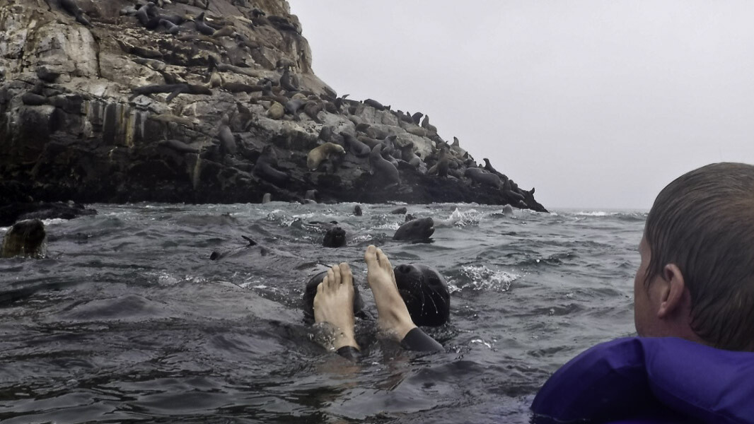 Swimming With Sea Lions Who Have A Foot Fetish - Traveling And Living In Peru-5852