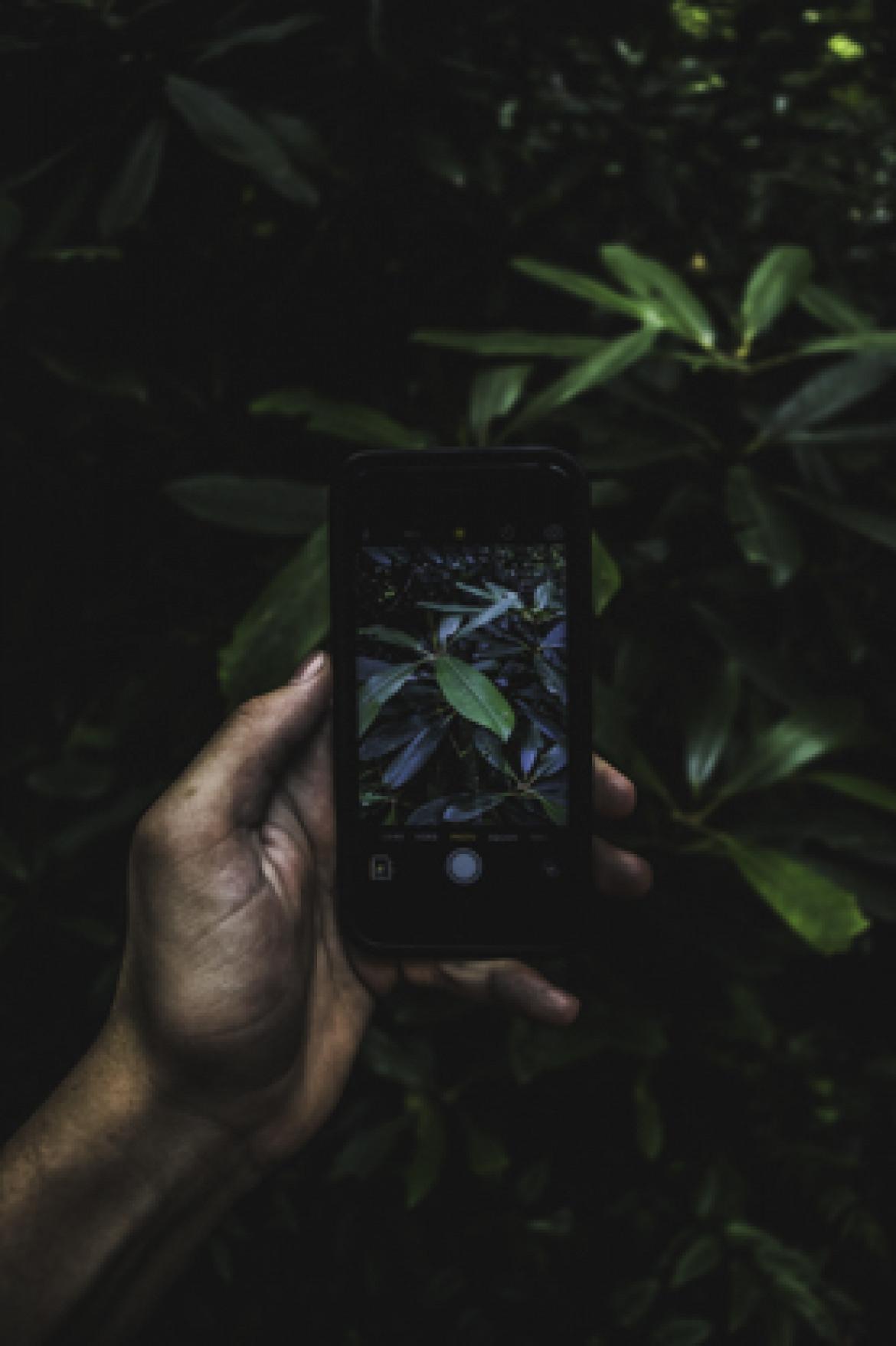camera phone jungle